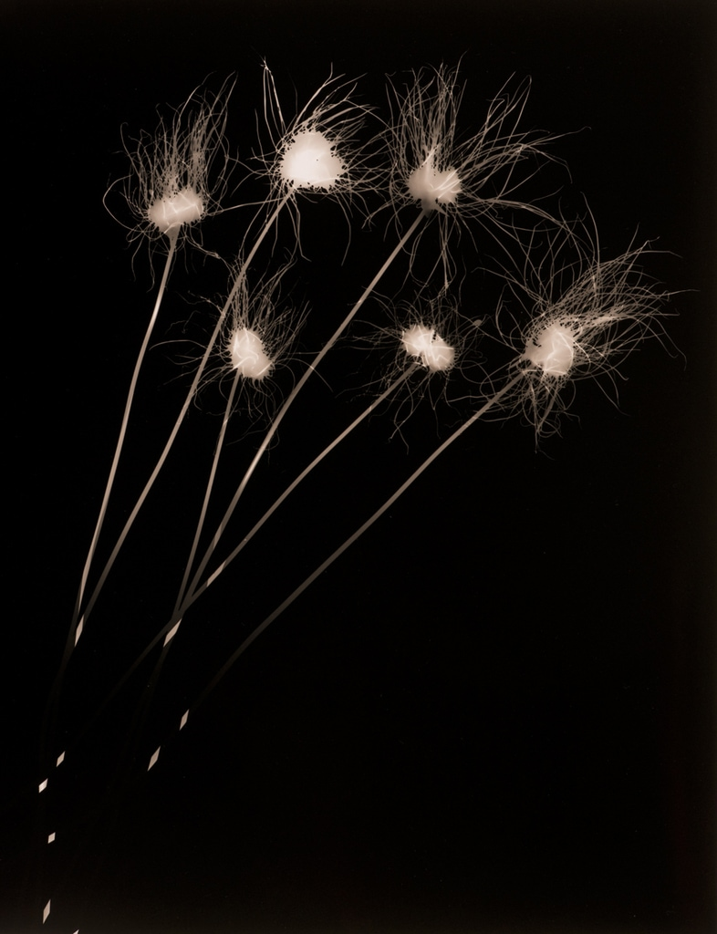Wildflowers, 2003