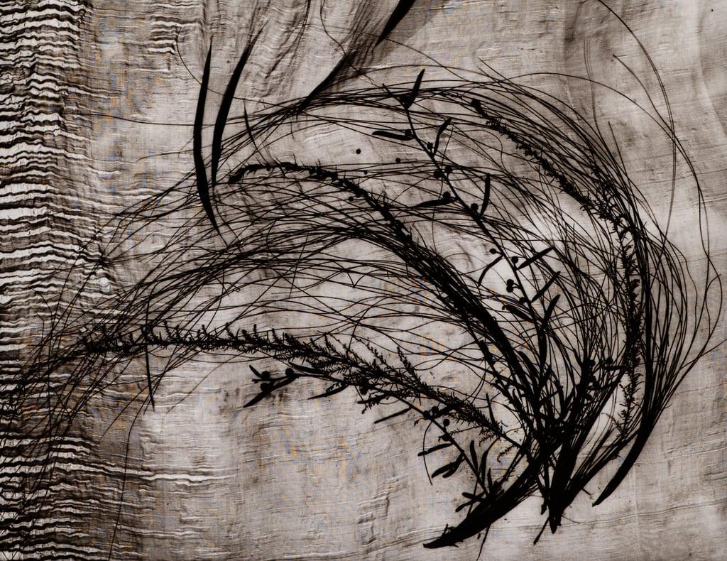 Grasses 2, 2003