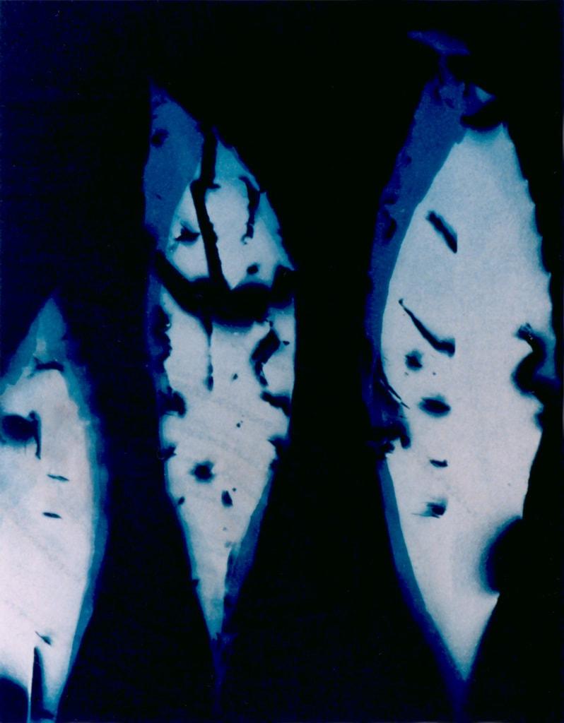 Loquat Leaves, 2004