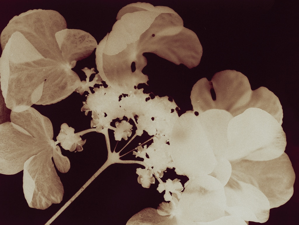 Blossoms, 2004