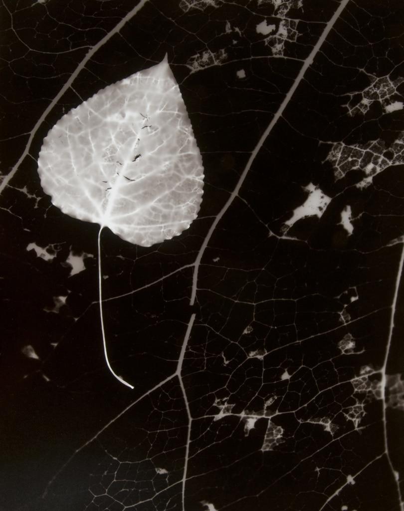 Leaf, 2005