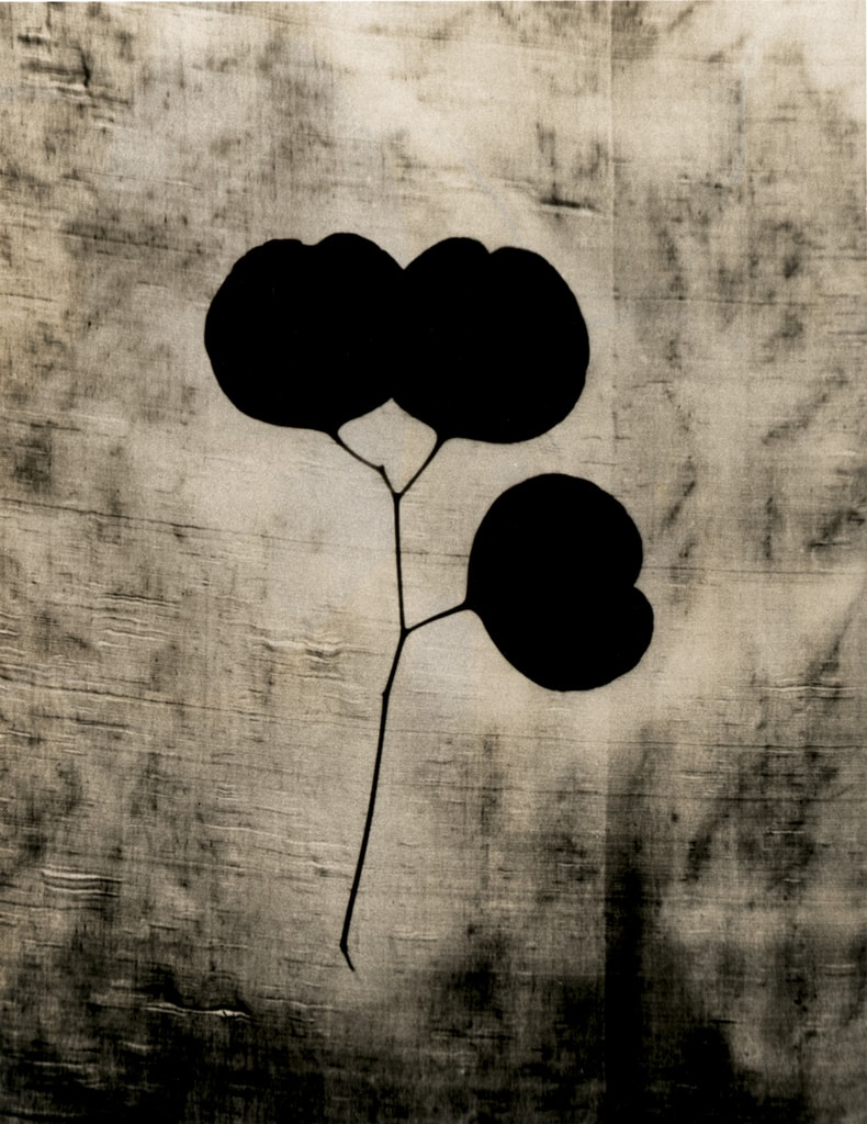 Heart Leaves, 2003
