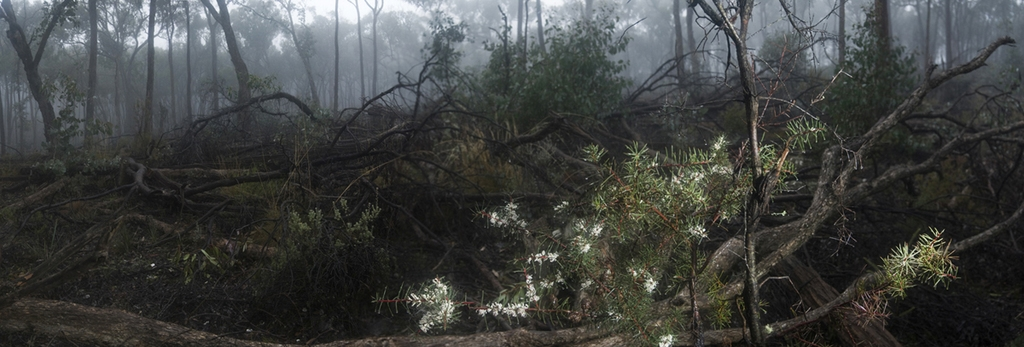Planned Thinning, Vic 2009